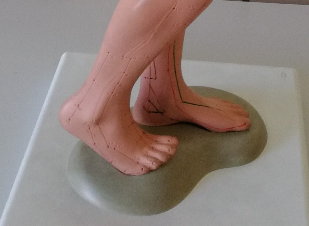 Meridiany zaznaczone na modelu człowieka
